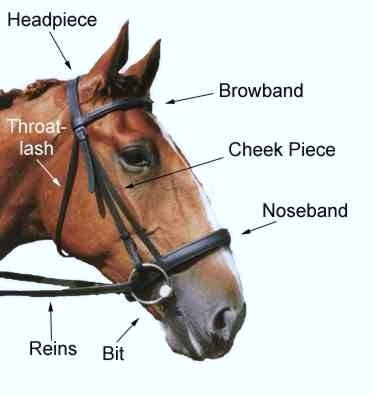 Parts_of_a_Bridle